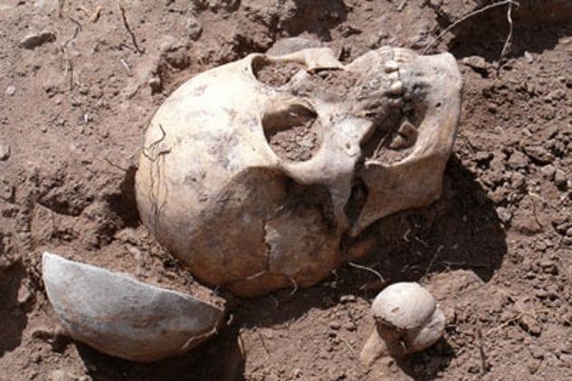gallina-skull