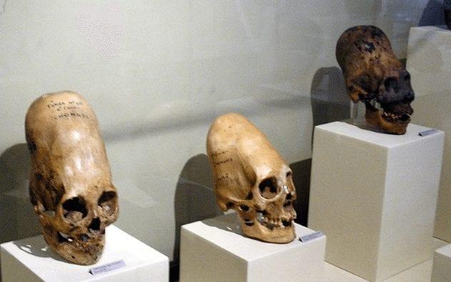 paracas-skulls