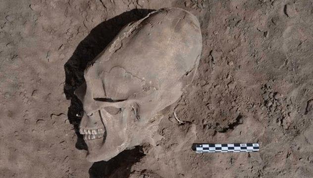 sonora-skull