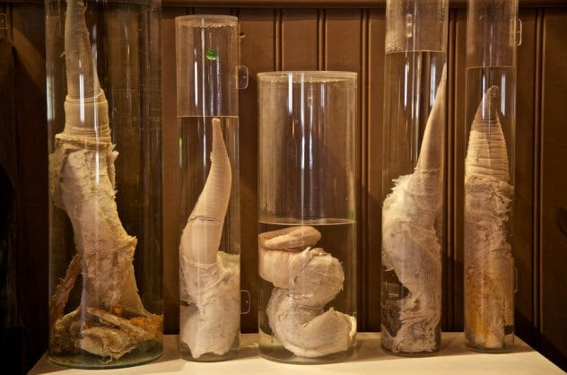 3-phallological-museum
