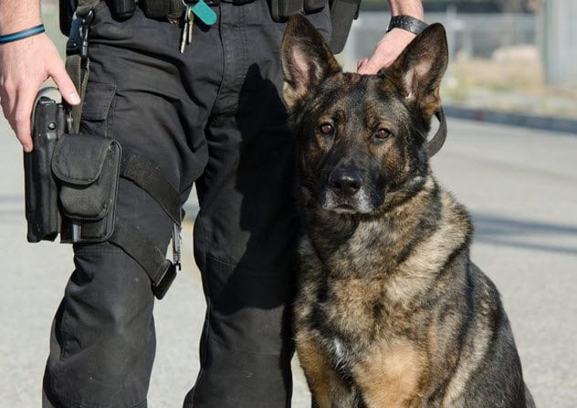 3a-police-dog-with-officer-168784128
