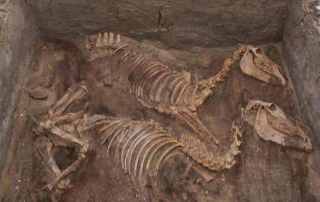 4-donkey-burials