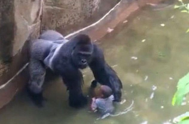 10a-harambe-with-child