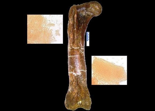 7-mor-1125-femur
