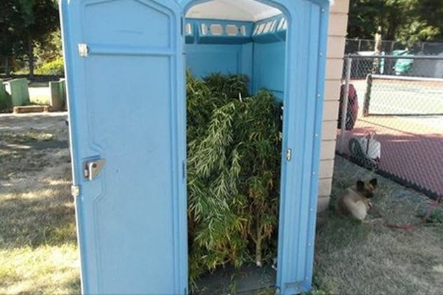 8-pot-in-potty