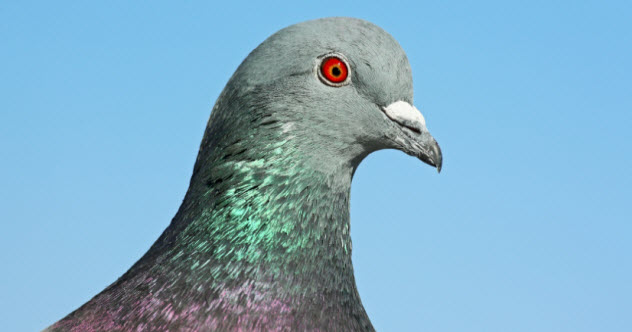 10 Reasons Pigeons Might Be The Most Unappreciated Bird Ever