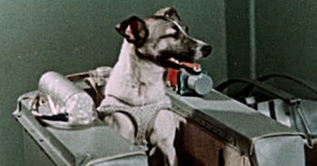 10 Tragic Facts About Laika The First Dog In Space Listverse