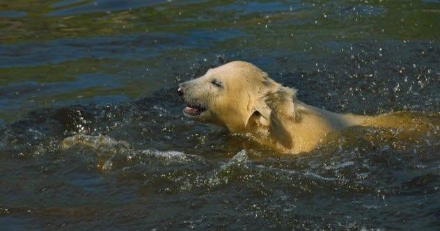 Swallowed By Sharks 4a-polar-bear-cub-swimming-626175788