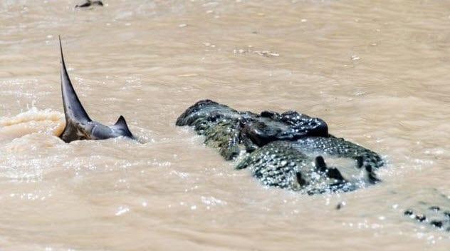 6-shark-and-croc