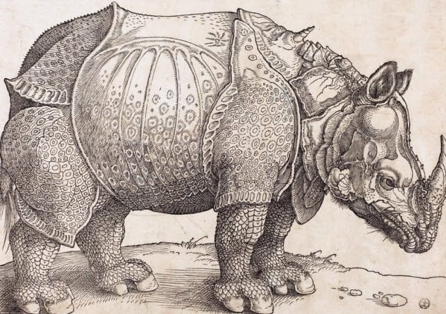 7-rhinoceros-in-armor