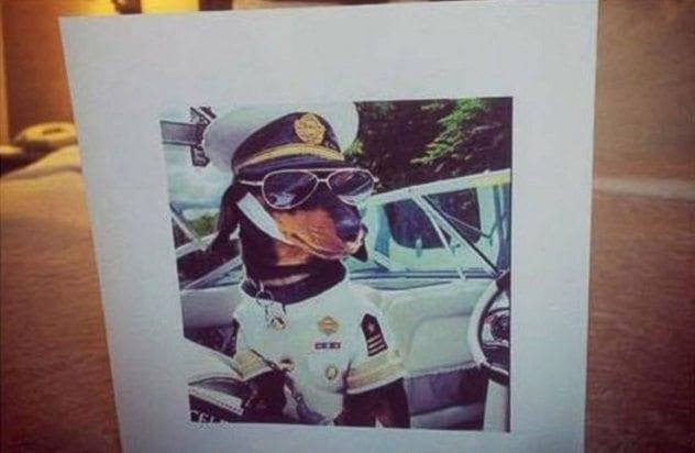 Dog Captain Pic