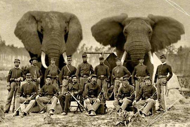 8-civil-war-elephants