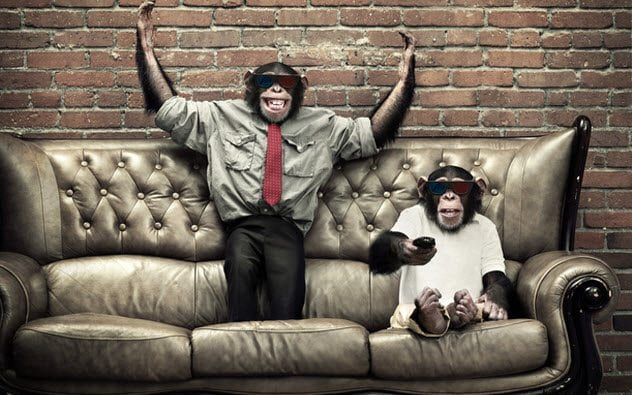 9a-chimps-watching-tv-143922052