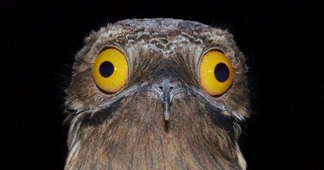 birddrugsa