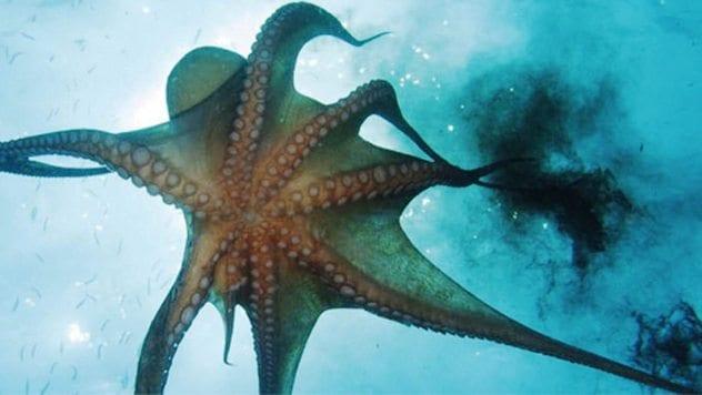 octopus-ink