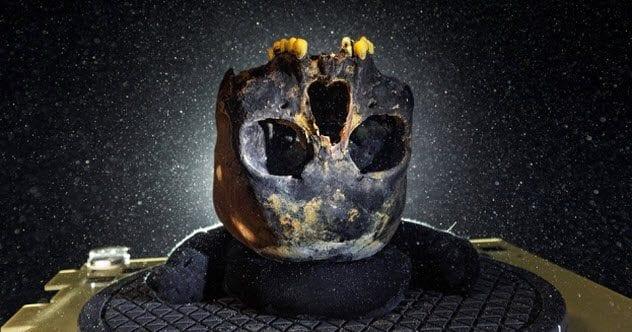2-naia-skull