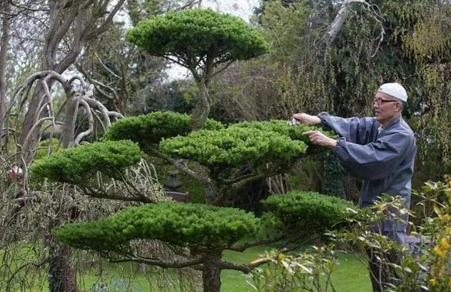 3-ninja-gardener