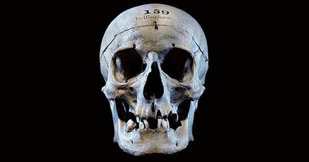 4-bellingham-skull
