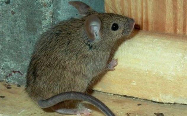 7-super-mouse