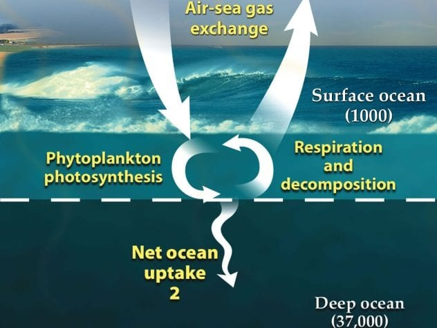 Ocean Carbon Cycle