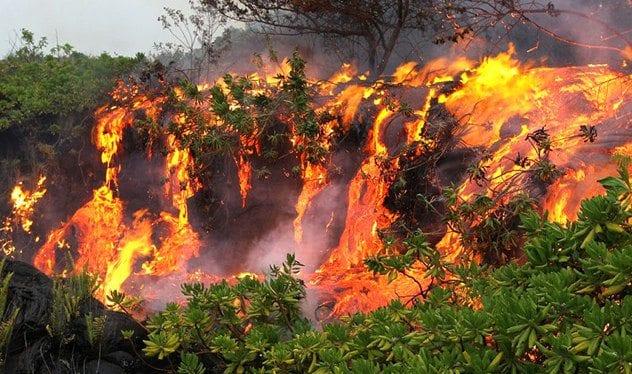 junglefire