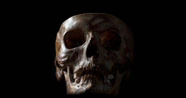 3a-human-skull-514938514
