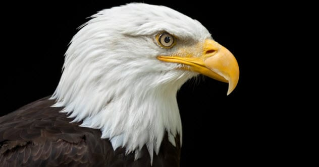 Photo of Top 10 Fascinating Facts About Eagles