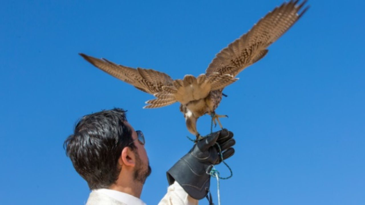 Top 10 Secret Ways Animals Help Humans - Listverse