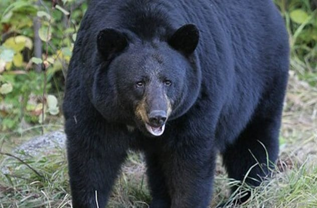 Top 10 Unusual Ways People Have Survived Bear Attacks