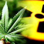 10 Bizarre Times Marijuana Showed Up In History