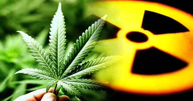 Photo of 10 Bizarre Times Marijuana Showed Up In History