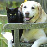 Top 10 Cases Of Pet Serial Killers