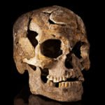 Top 10 Ancient Skulls Revealing Rare Facts And Mysteries