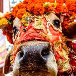 10 Animals Worshipped As Holy