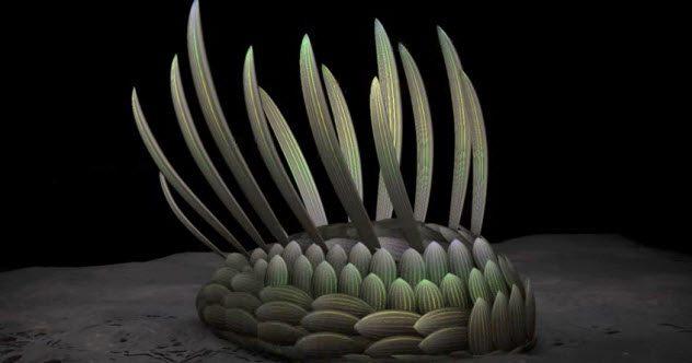 Photo of 10 Bizarre Organisms From The Burgess Shale