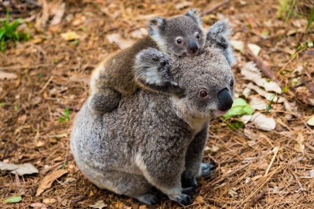 10 Animals That Don T Look Dangerous But Are Actually