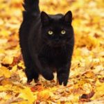 10 Tall Tales About Black Cats