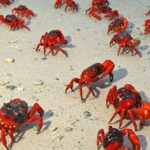 10 Islands With Interesting Animal Populations