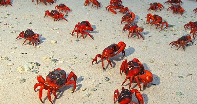 Photo of 10 Islands With Interesting Animal Populations