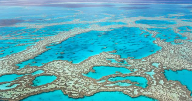 Photo of Top 10 Fresh Facts About The Great Barrier Reef