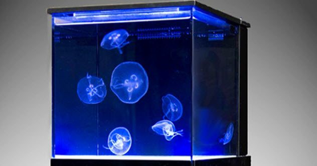 10 Fascinating Uses For Jellyfish - Listverse