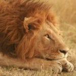 10 Places Where Dangerous Animals Live Alongside Humans