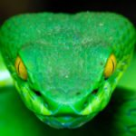 10 Horrifying Stories Of People Killed By Snakes
