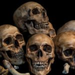 10 Gross Historical Facts About The Skeleton Trade