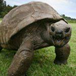 10 Oldest Animals Alive