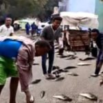 10 Recent Rains Of Fish