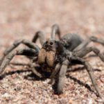 10 Deaths And Serious Injuries Caused By Spiders