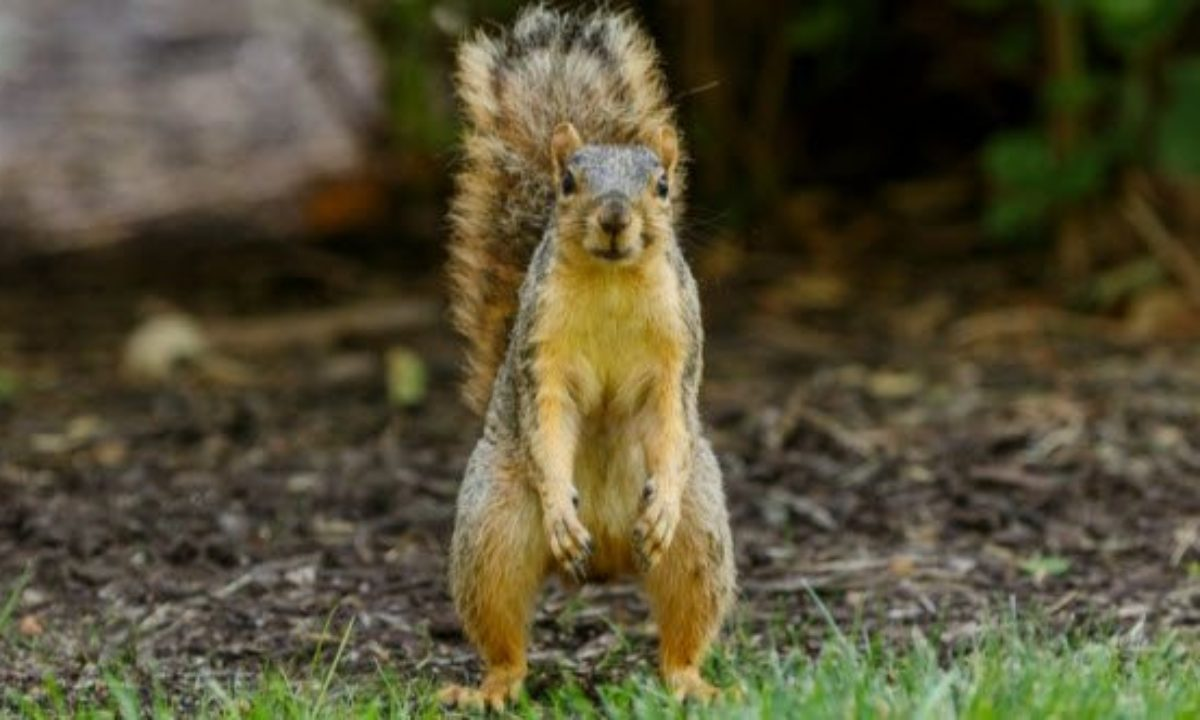 Woman trains squirrels to attack