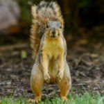 10 Terrifying Tales Of When Squirrels Attack