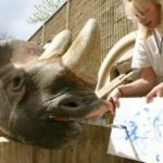 10 Animals Who Became Artists